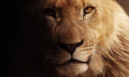 OTA鼻祖Priceline谈竞争:看不见的狮子才更可怕