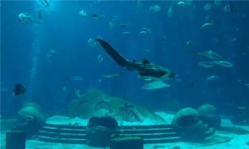 毁于海 归于海!世界上真的有亚特兰蒂斯这个地方吗?